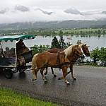 Mit der Pferdekutsche zum Gasthaus - ist trotz Regen sehr romantisch