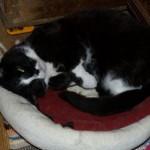 Tigers Bett mag auch derLauser gern