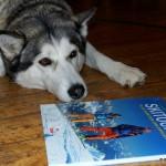 Husky Nuna interessiert sich vermeintlich gar nicht für das Buch