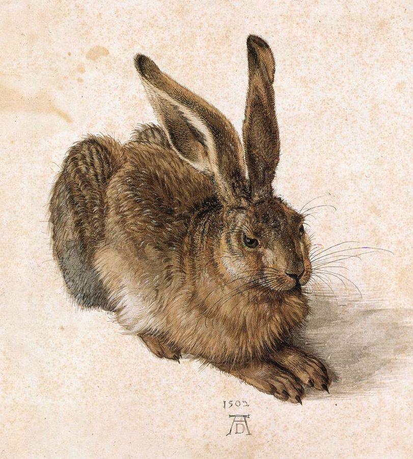 Dürers Feldhase